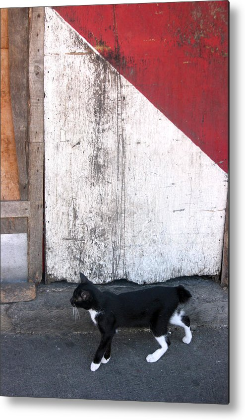 Photographer Metal Print featuring the photograph Street Cat by Jez C Self