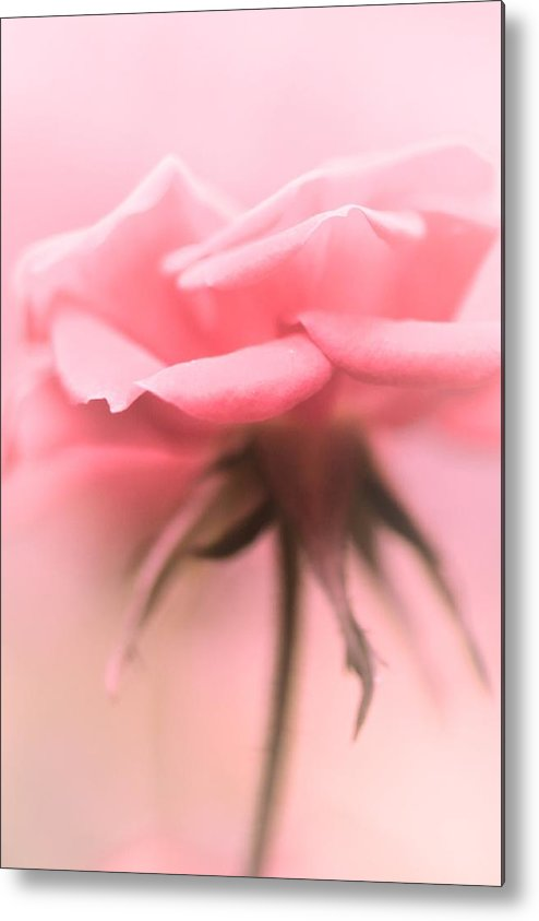 Metal Print featuring the photograph Sweet Lonesome Rose by The Art Of Marilyn Ridoutt-Greene