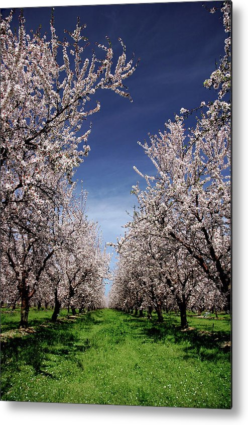Agriculture Metal Print featuring the photograph The Almond Bloom by Terrance Emerson