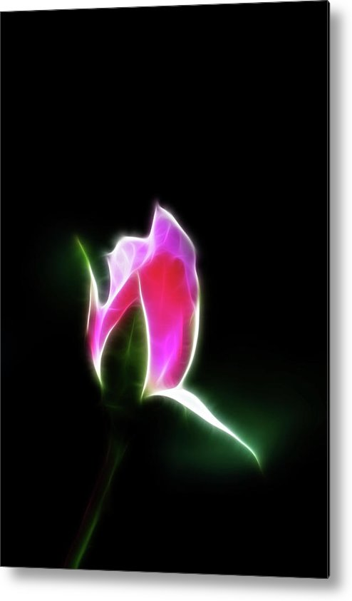 Rose Metal Print featuring the photograph The Light Of Heaven Shining Down by Lisa Stanley