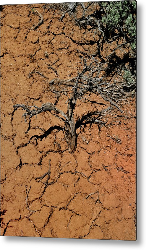 Landscape Metal Print featuring the photograph The Parched Earth by Ron Cline