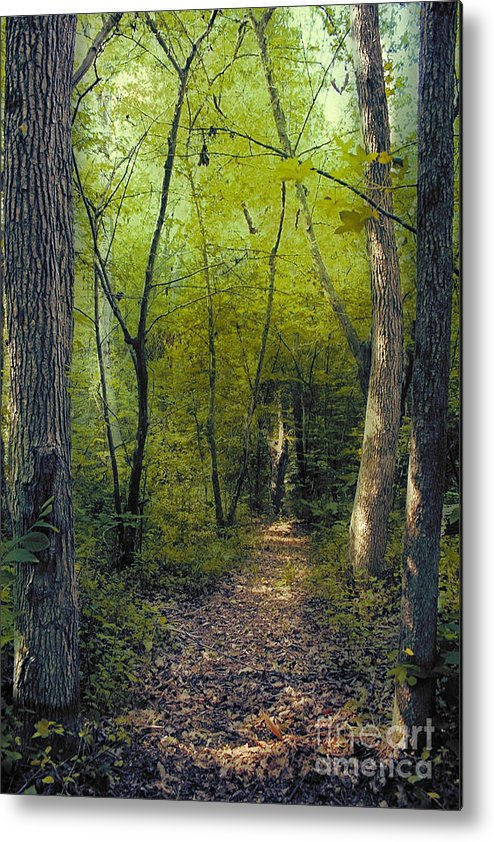 Path Metal Print featuring the photograph The Path by Sari Sauls