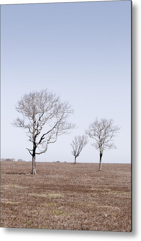 Trees Metal Print featuring the photograph Three Trees - Nantucket by Henry Krauzyk
