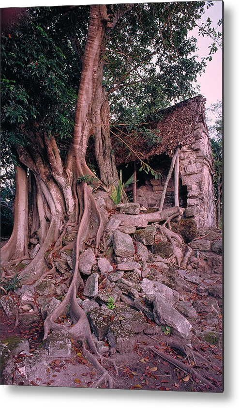 Tree Metal Print featuring the photograph Tree And Ruins In Cozumel by Thomas Firak