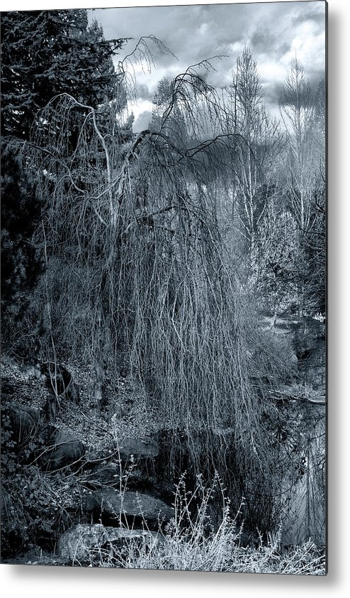 Tree Metal Print featuring the photograph Tree In Winter by Paul Kloschinsky