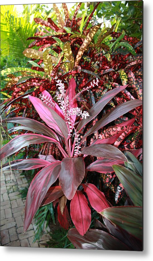 Floral Metal Print featuring the photograph Tropic Walk by Jim Derks