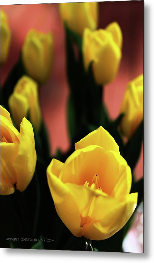 Tulips Metal Print featuring the photograph Tulips by Matt Truiano