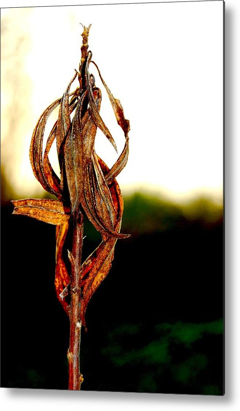 Nature Metal Print featuring the photograph Twist Plant by Lauren Macko