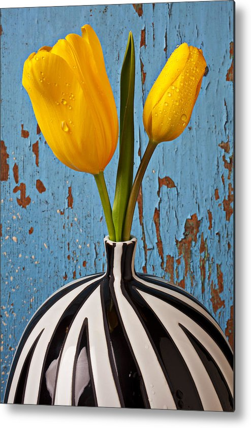 Two Yellow Metal Print featuring the photograph Two Yellow Tulips by Garry Gay