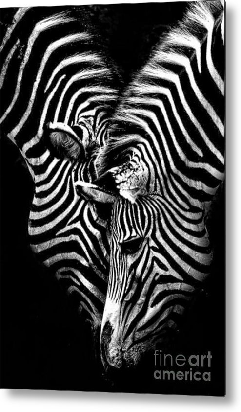 Zebras Metal Print featuring the digital art Urelenting Love by Michael Knight