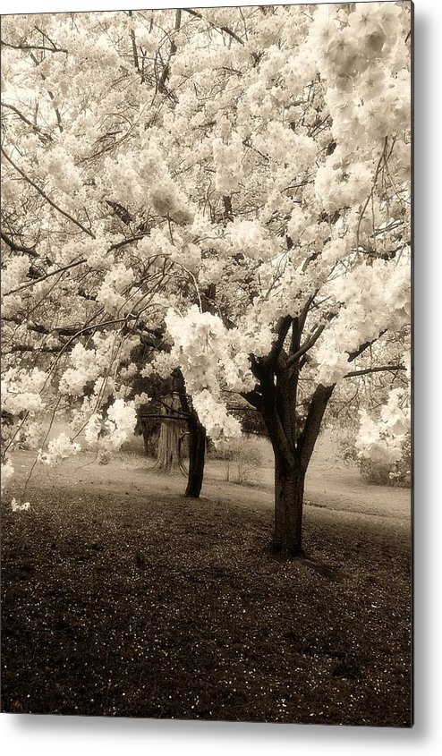 Black And White Metal Print featuring the photograph Waiting For Sunday - Holmdel Park by Angie Tirado