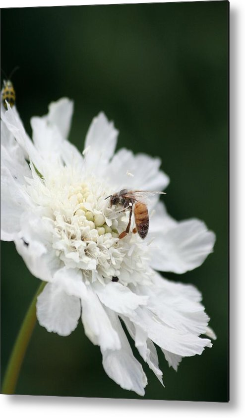 Wasp Metal Print featuring the photograph Wasp And Ladybug by Melanie Beasley