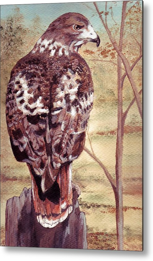 Red-tail Metal Print featuring the painting Watch Hawk by Debra Sandstrom