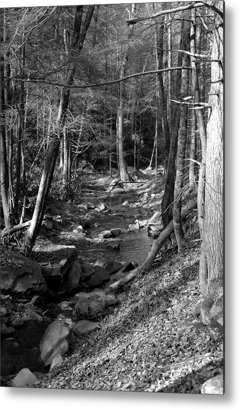 Nature Metal Print featuring the photograph Wesser Creek Trail by Kathy Schumann