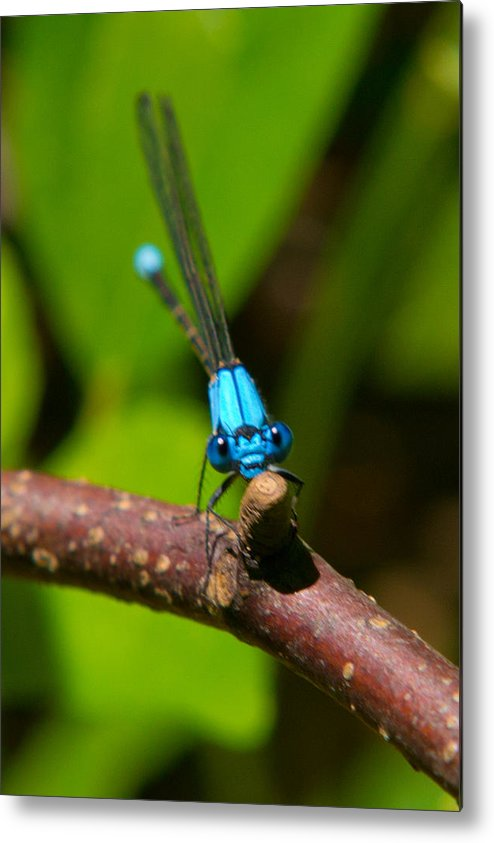 Insects Metal Print featuring the photograph What Are You Looking At by Frank Pietlock