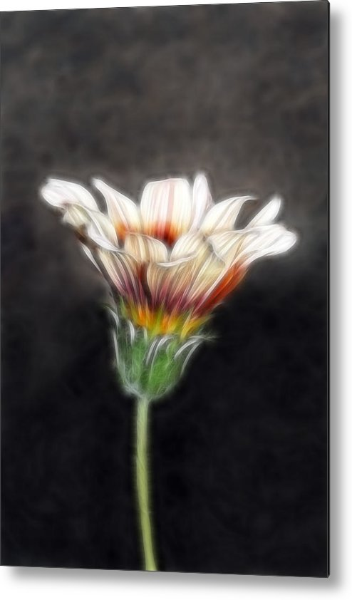 Wild Flowers Metal Print featuring the photograph Wild Petal Dreams by Lesley Smitheringale