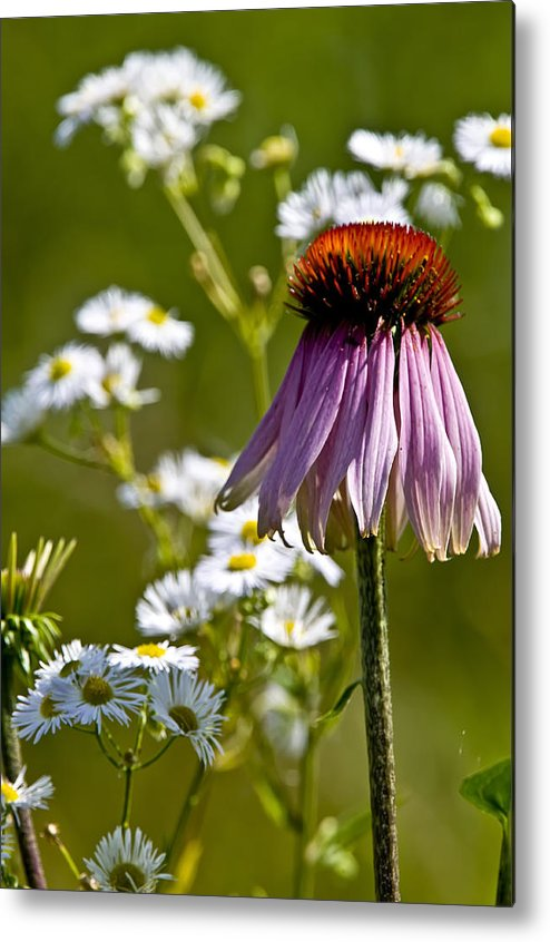 Echinacea Metal Print featuring the photograph Wildflowers by Michael Cummings