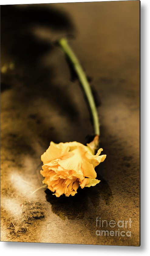Flower Metal Print featuring the photograph Wilting Puddle Flower by Jorgo Photography - Wall Art Gallery