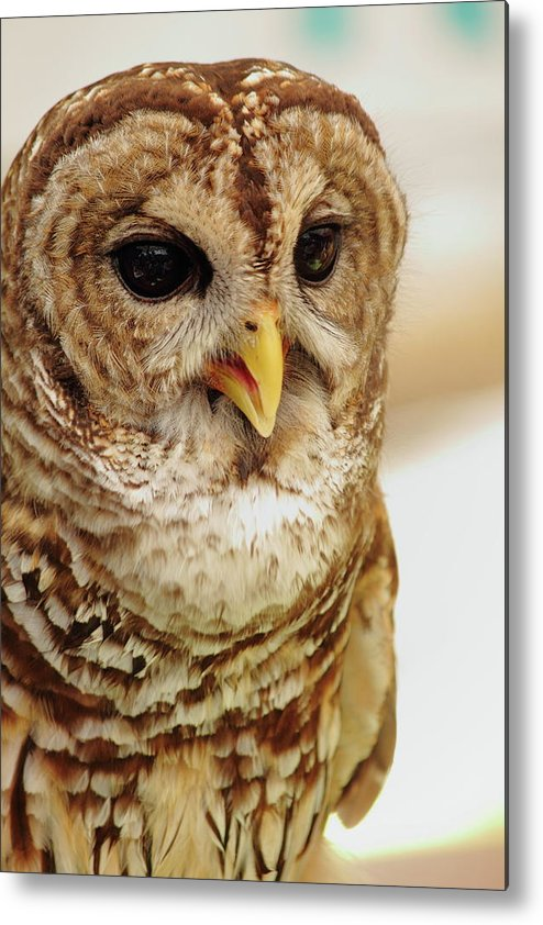 Owl Metal Print featuring the photograph Wisdom by Jamie Smith