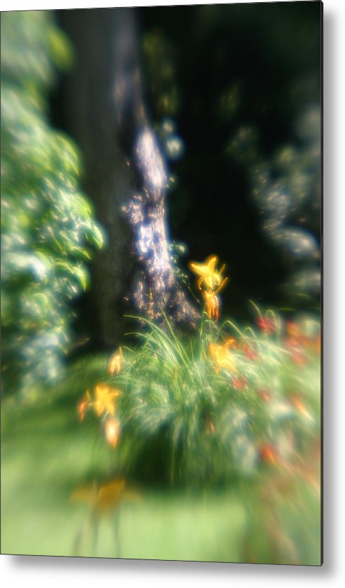 Metal Print featuring the photograph Yellow Flowers In Monets Garden by Jennifer McDuffie