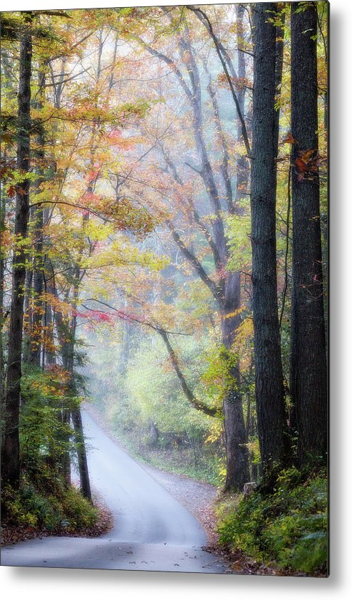 Appalachian Metal Print featuring the photograph A Canopy Of Autumn Leaves by Lana Trussell