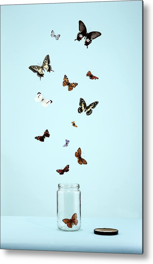 Animal Themes Metal Print featuring the photograph Butterflies Escaping From Jar by Martin Poole
