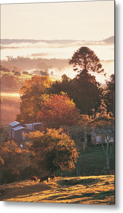 Tranquility Metal Print featuring the photograph Morning Mist Over South Coast Farmland by Auscape / Uig