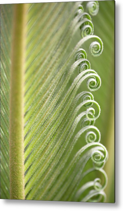 Parallel Metal Print featuring the photograph Opening Leaves Of A Japanese Sago Palm by Neil Overy