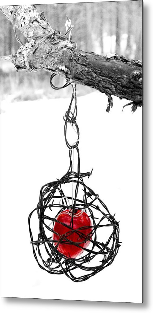 Cage Metal Print featuring the photograph Forbidden Fruit by Aaron Aldrich