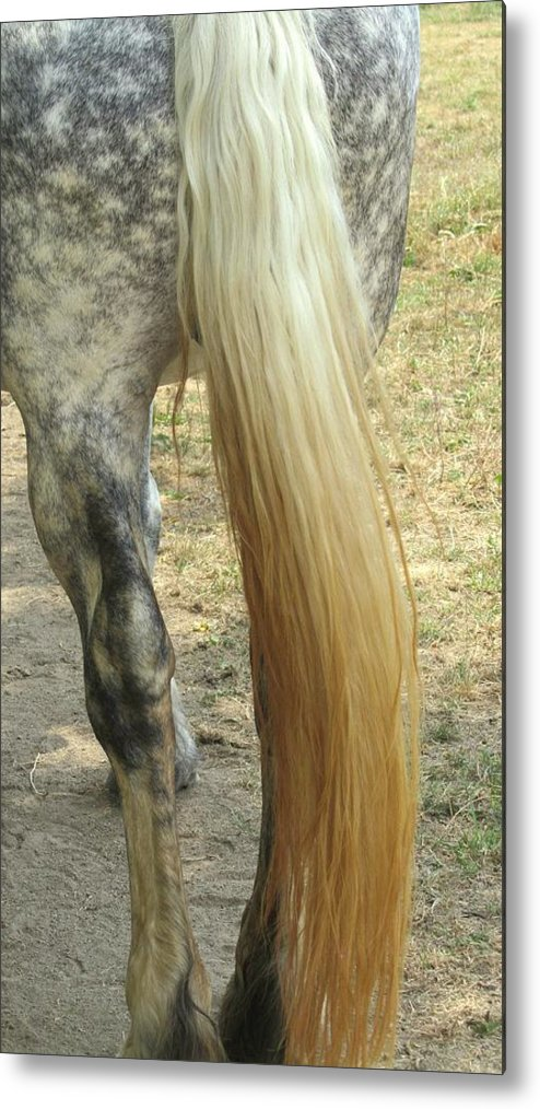 Horse Tail Metal Print featuring the photograph Horse-tale by Todd Sherlock