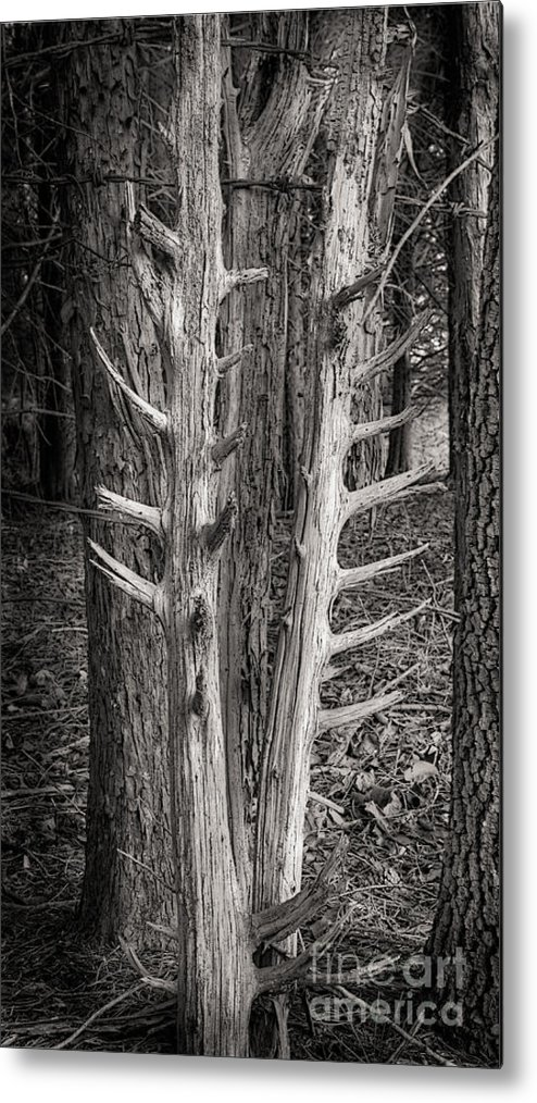 Scotopic Metal Print featuring the photograph Scotopic Vision 4 - Trees by Pete Hellmann
