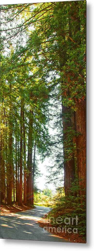 Redwoods Metal Print featuring the photograph Redwood Wall Mural Panel 2 by Artist and Photographer Laura Wrede