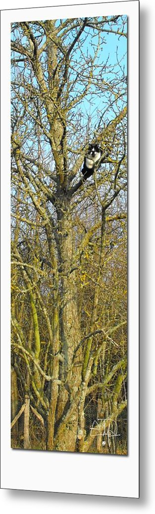 Cat Metal Print featuring the photograph The Cat Finds Its Path by Natural Meditation Art