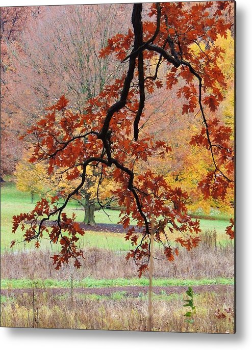 Beautiful Fall Colors Metal Print featuring the photograph Autumn Rainbow by Todd Sherlock