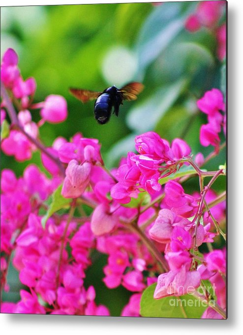 Black Bee Metal Print featuring the photograph Ebony Visitor by Craig Wood