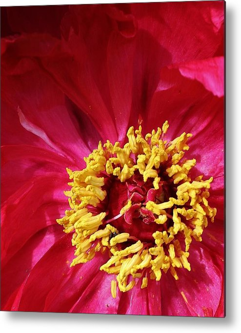 Flora Metal Print featuring the photograph Hot Hot Hot by Bruce Bley