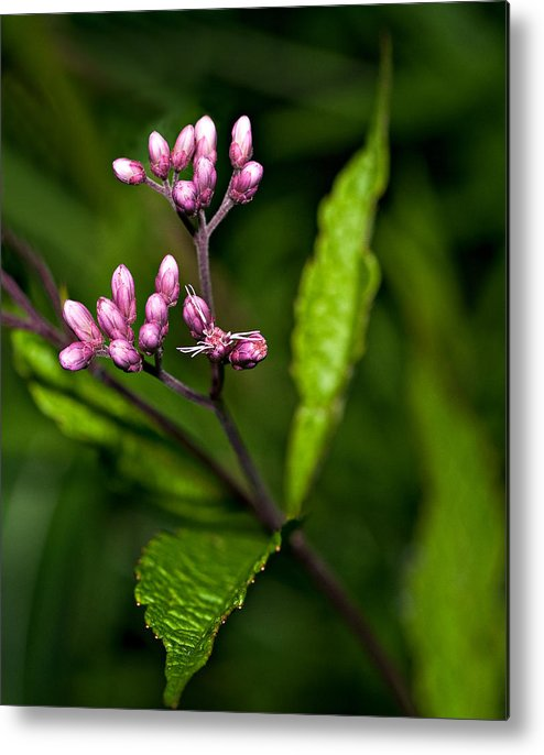 Flowers Metal Print featuring the photograph Ditch Mystery by Steve Harrington
