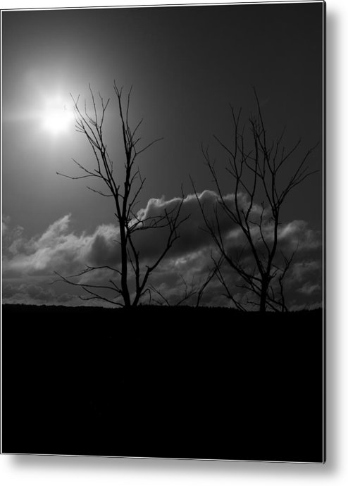Tree Metal Print featuring the photograph Reach For The Sun by Nigel Jones