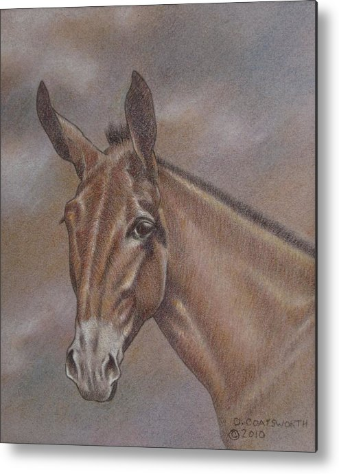 Metal Print featuring the pastel Mule Head by Dorothy Coatsworth