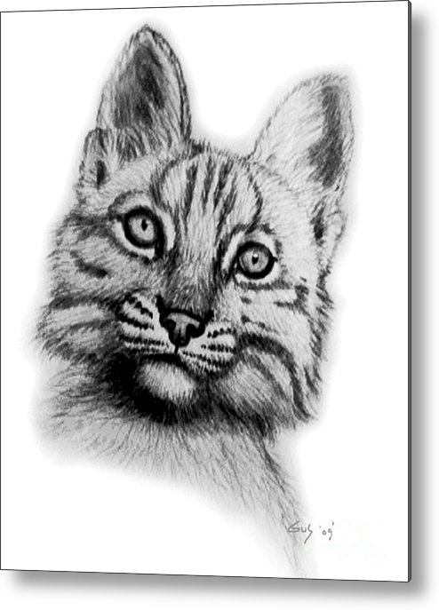 Baby Bobcat Metal Print featuring the drawing Baby Bobcat by Nick Gustafson