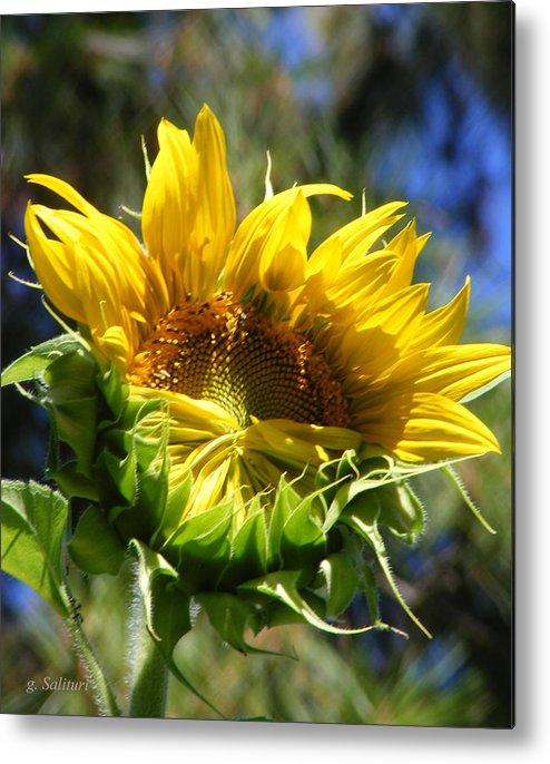 Sunflower Metal Print featuring the photograph Bashfull by Gail Salitui