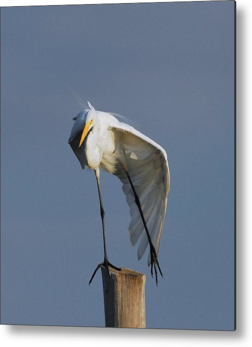 Great Egret Metal Print featuring the photograph Egret 2 by Joyce StJames