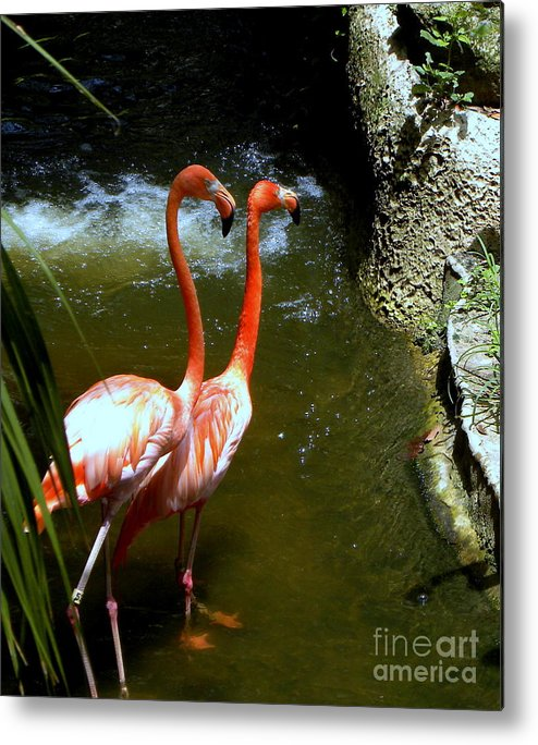 Flamingo Metal Print featuring the photograph Flamingo Pair by Terri Mills