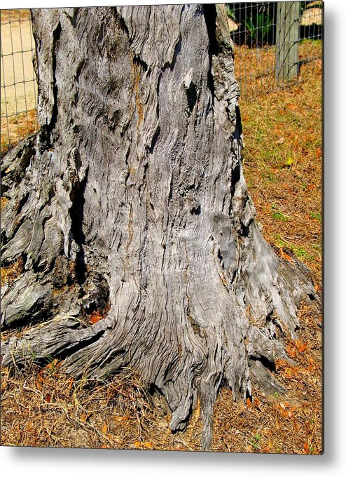 Florida Metal Print featuring the photograph Florida Tree Stump by Sharon Wright Duncan