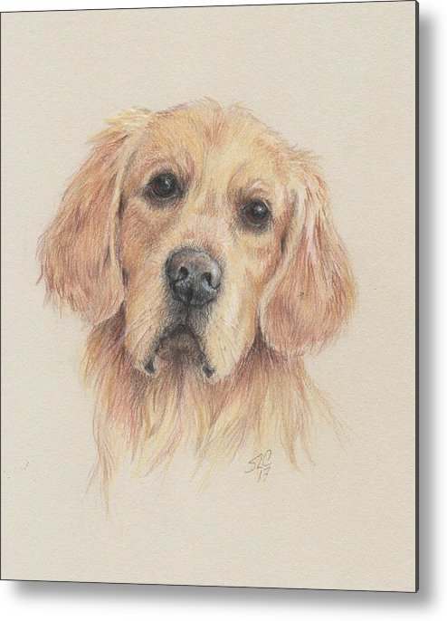 Dog Metal Print featuring the drawing Gentle Gold by Susan Coons