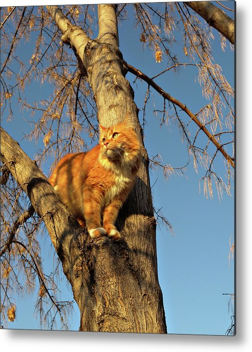 Cat Metal Print featuring the photograph Like The Big Boys by ShaddowCat Arts - Sherry