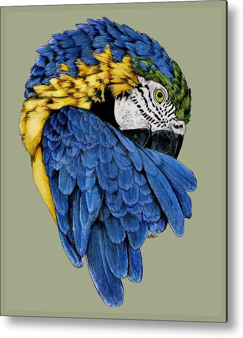 Parrot Metal Print featuring the drawing Macaw by Crystal Rolfe