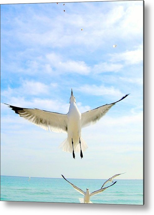Gulls Metal Print featuring the photograph Soaring by George I Perez