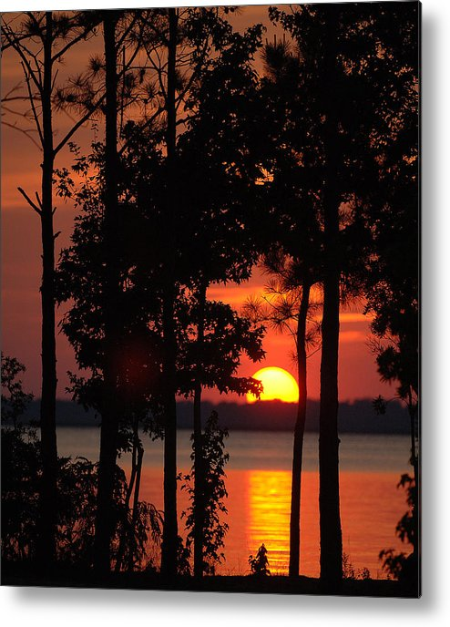 Sunset. Trees Metal Print featuring the photograph Summer Sunset by Travis Aston