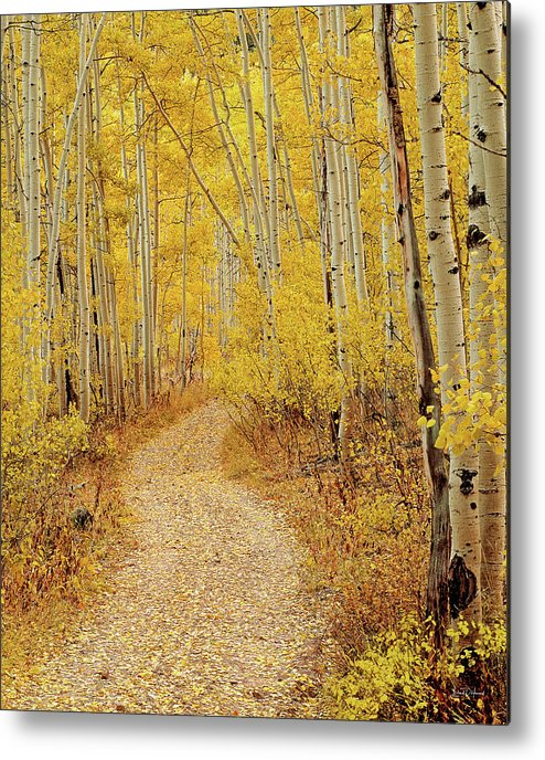 Autumn Metal Print featuring the photograph Autumn Road by Leland D Howard